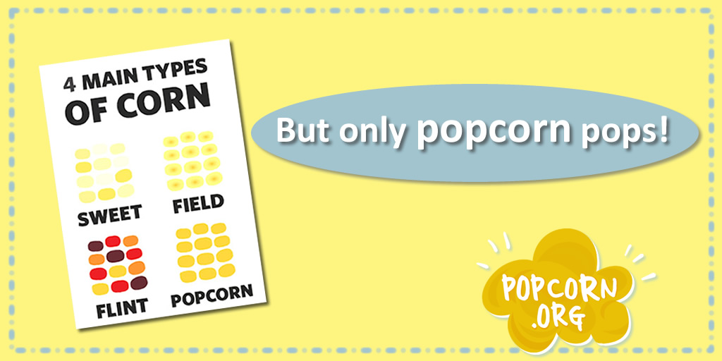 How high can popcorn pop